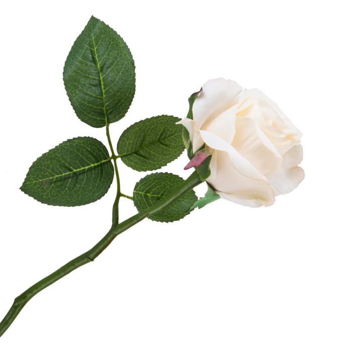 Роза Suzane ванильная 25см