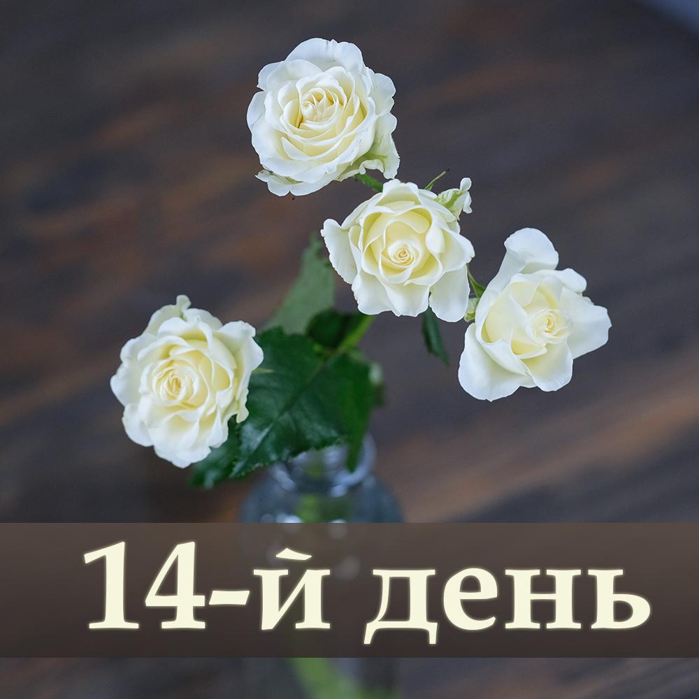 Розы кустовые белые Vanilla