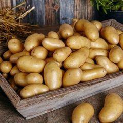 Картофель белый (Азербайджан) / 1 кг