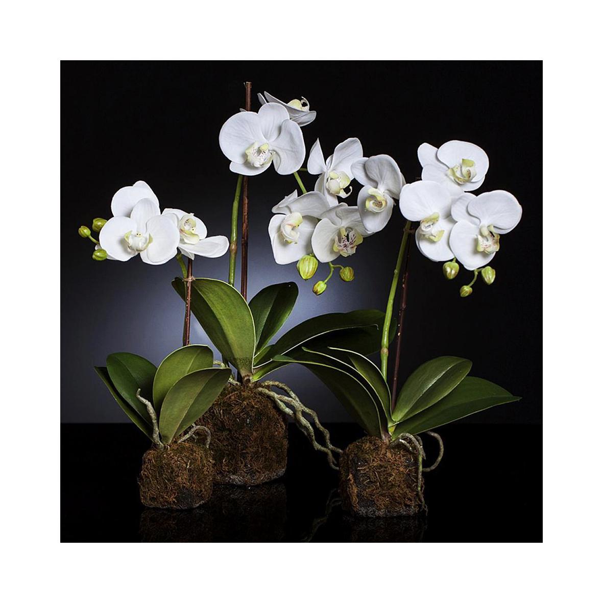 Орхидея с землёй