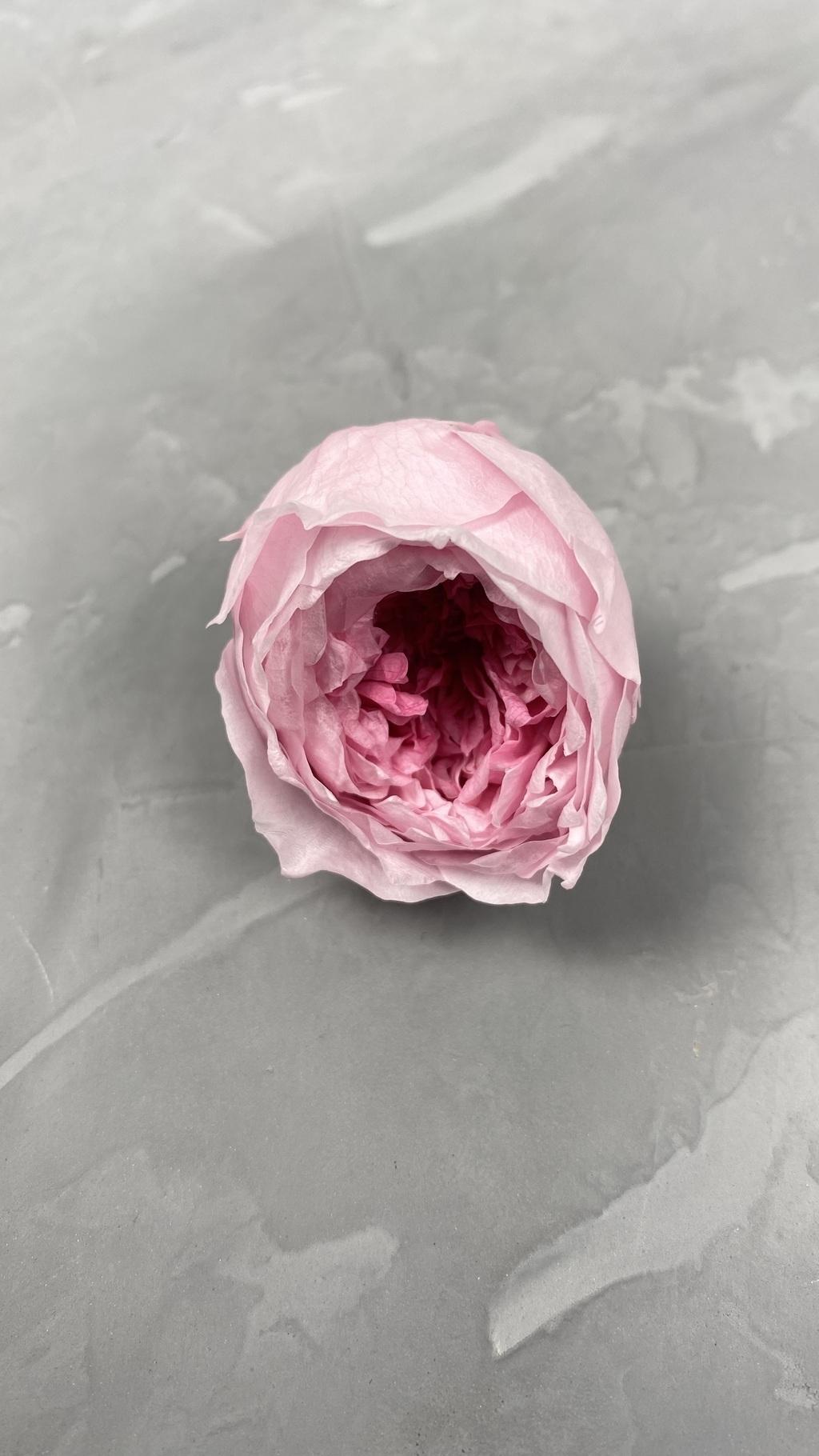 Роза пионовидная с сердцевиной розовая d=4,5 см