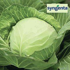 Кевин F1 семена капусты белокочанной (Syngenta / Сингента)