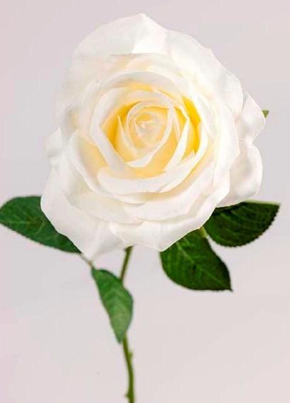 Роза кремовая