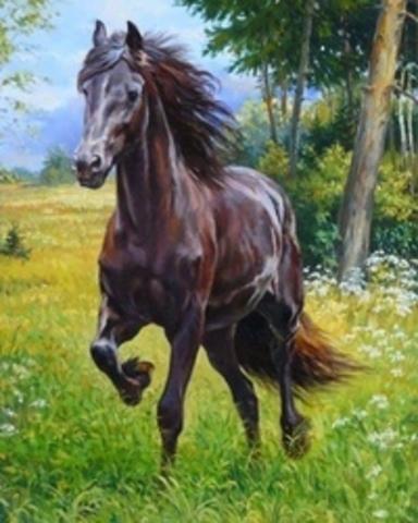 Картина раскраска по номерам 40x50 Жеребец на прогулке (арт. Y5716)