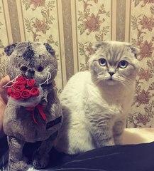Кот Басик фото отзывы