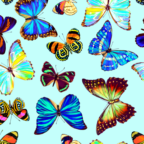 тропические бабочки_03