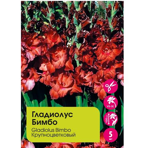Гладиолус Бимбо крупноцветковый 5шт