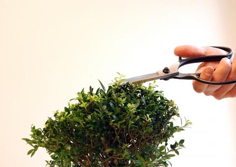Ножницы для бонсай Okatsune 200, 230/75 мм