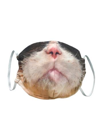 Маска тканевая Gekoko «Серьезный кот»