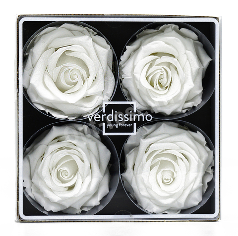 Стабилизированный Бутон Розы Verdissimo (Франция). Цвет Белый (Диаметр 7-8см)