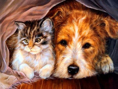 Алмазная Мозаика 40x50 Котенок и собака под пледом (арт. GA74404 )