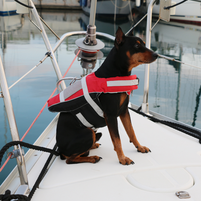 Lalizas comfy pet lifejacket