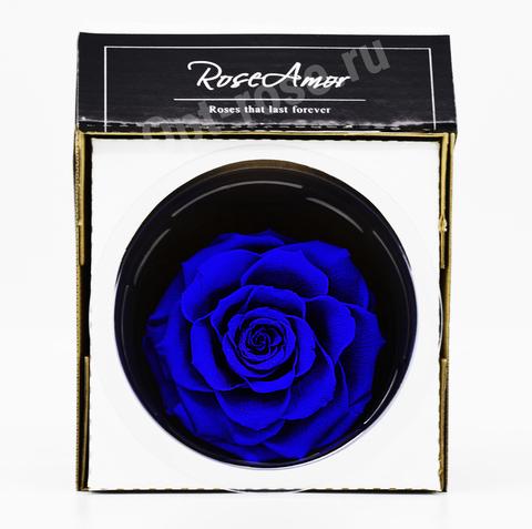 Стабилизированный Бутон Розы Кинг Rose Amor(Эквадор)Bonita Цвет Синий (10-12см)