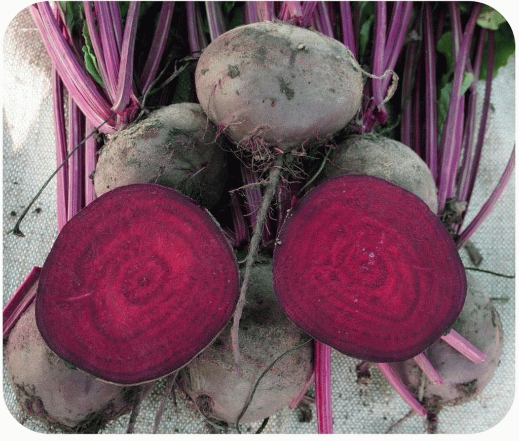 Свекла Игл F1 семена свеклы (Sakata / Саката) ИГЛ_F1-2.jpg_семена_овощей_оптом_семена_овощей_оптом_семена_овощей_оптом.jpg