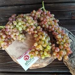 Виноград КишМиш (Армения) / 1 кг