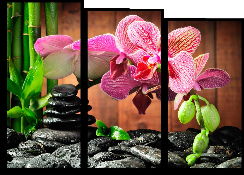 """Цветы Модульная картина """"Орхидея"""" М9.png"""