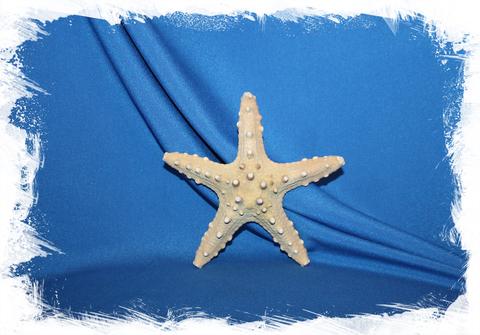 Моркая звезда