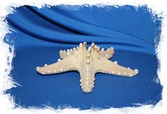 Декоративная морская звезда сушеная