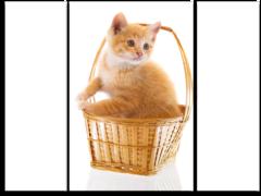 "Модульная картина ""Кошка в корзинке"""