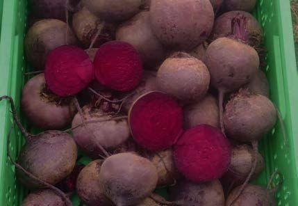 Свекла Кардиал F1 семена свеклы (Sakata / Саката) КАРДИАЛ_F1_семена_овощей_оптом.jpg