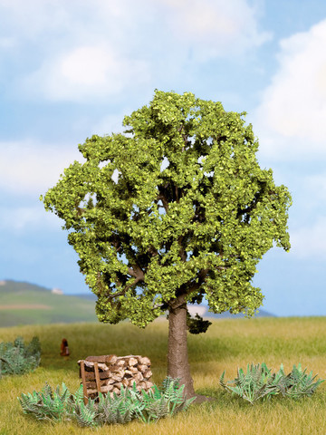 Дерево граб, (13 см)