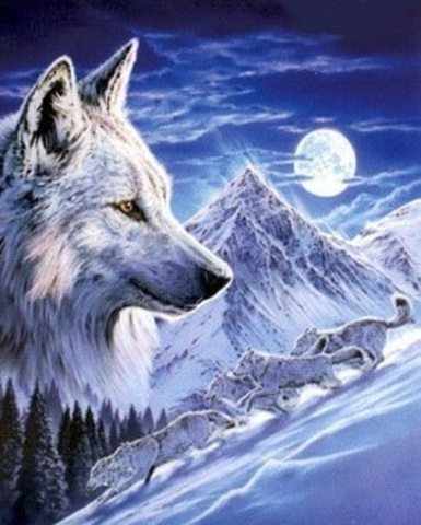 Алмазная Мозаика 5D 40x50 Белая волчица (арт. LT0314)