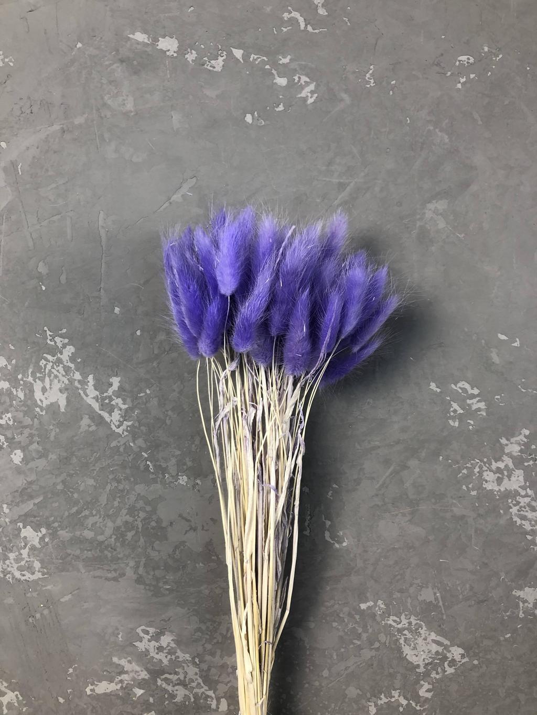 Лагурус фиолетовый маленький пучок