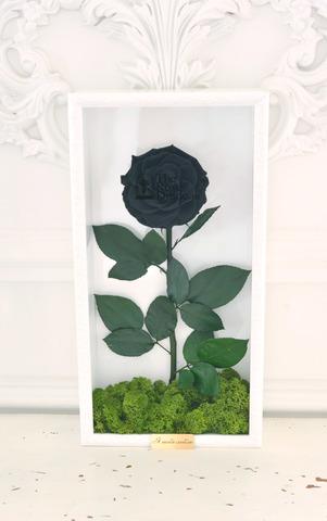 Стабилизированная Роза в Картине Premium Оптом Размер*Бутон (44х22х8см*11см) Цвет черная