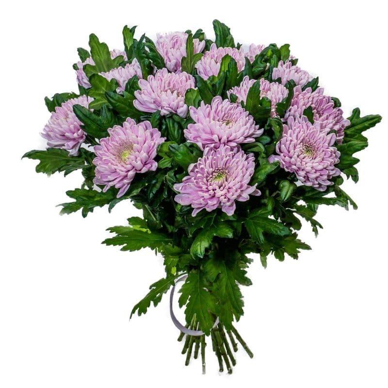 Букет из 15 розовых одноголовых хризантем