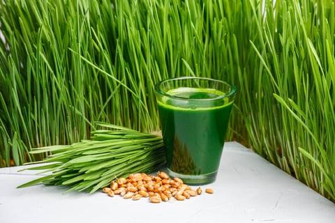 сок из ростков пшеницы