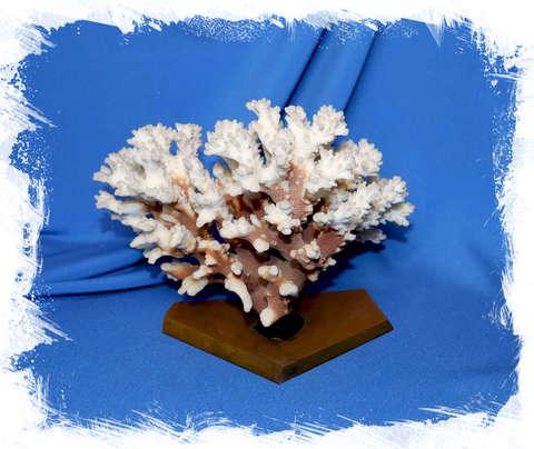 Коралл на коричневой подставке 18 см.