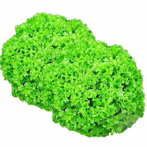 Салат Лолло Бионда 1 шт Green Eco