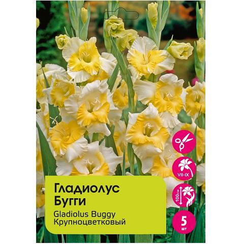 Гладиолус Бугги крупноцветковый 5шт