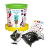 Набор для выращивания в горшочках Happy Plant Незабудка голубая