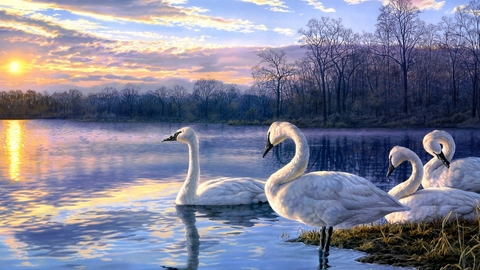 Картина раскраска по номерам 40x50 Лебеди на берегу реки
