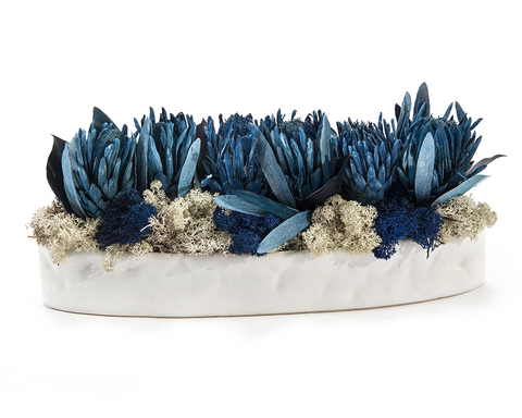 Blue Protea