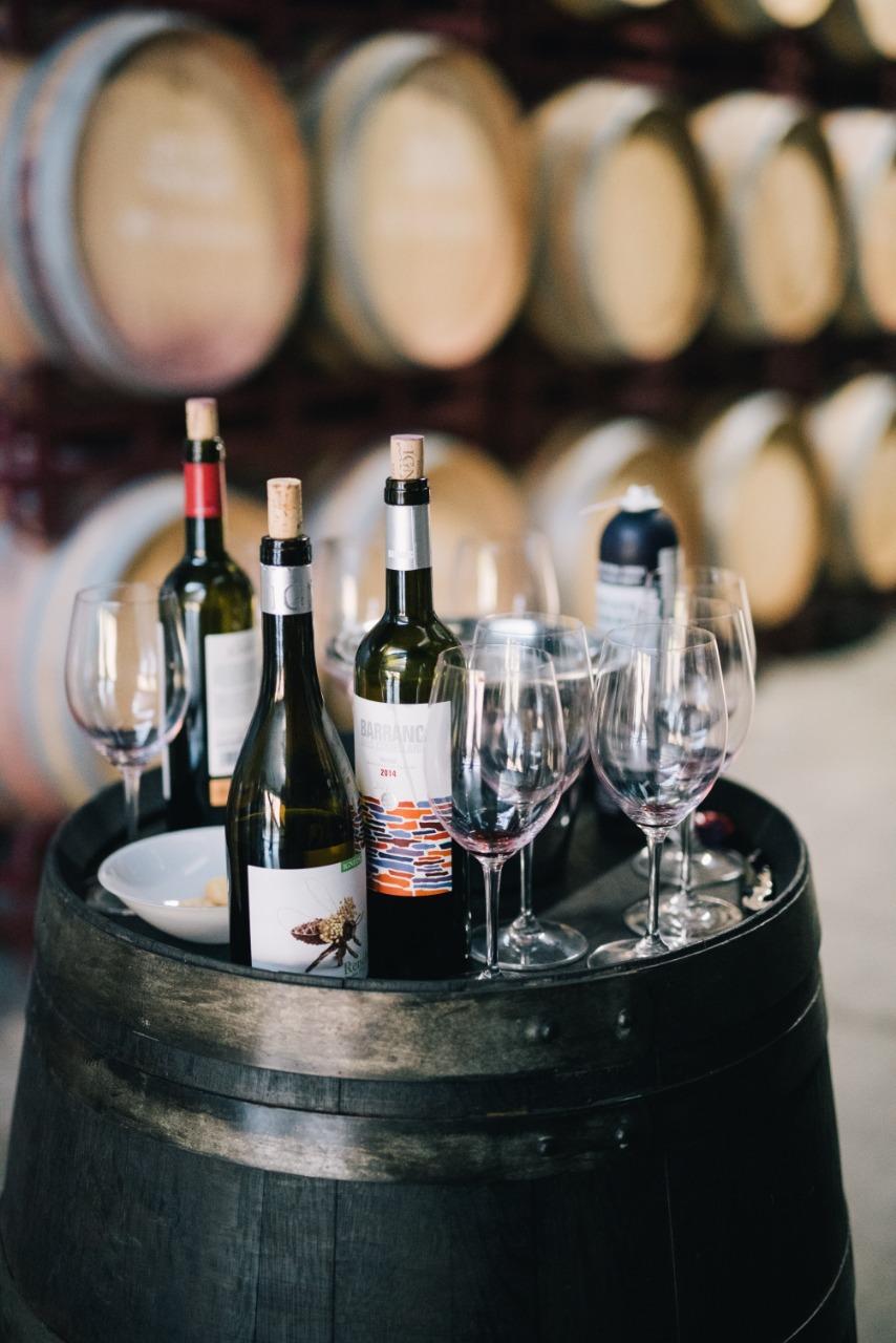 Todo sobre el vino español фото