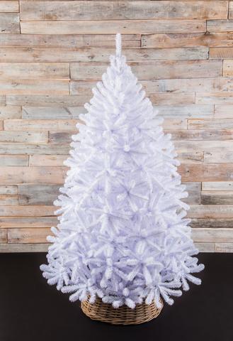 Triumph Tree Ель Исландская белоснежная 1.55 м