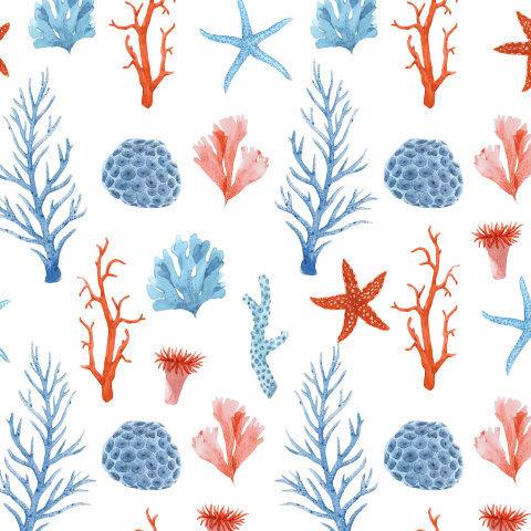 Кораллы и Морская звезда