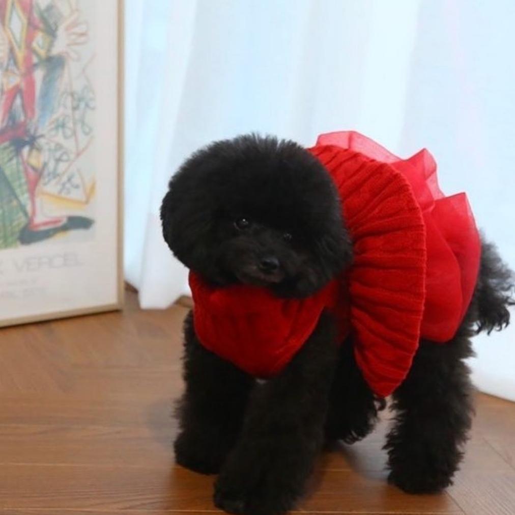 0321 BH - Платье для собак