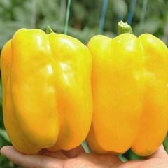 Риалто F1 семена перца сладкого (Nunhems / Нюнемс)