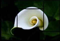 "Модульная картина ""Белый цветок"""