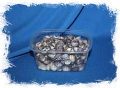 Фиолетовые ракушки для поделок