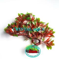 Растение Атман KA-153A