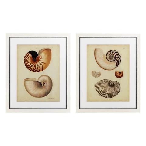 Постер Antique Nautilus ( 2шт.)