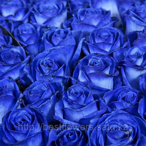 Синие розы (Голландия, вы сами выбираете количество)