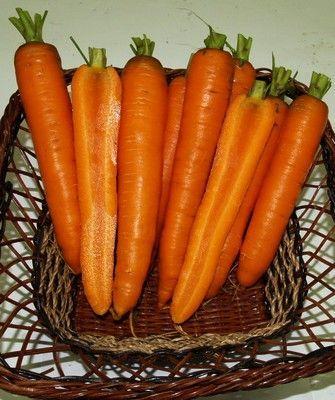 Нантская Карболи F1 семена моркови нантской (Seminis / Семинис) КАРБОЛИ_F1__Carboly_F1__семена_овощей_оптом.JPG