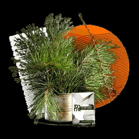 Табак Peter Ralf Midnight Forest (Полуночный Лес) 50г