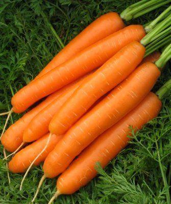 Нантская Карведжо F1 семена моркови нантской (Seminis / Семинис) Карведжо_F1__Karvedgo_F1__семена_овощей_оптом.jpg