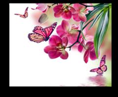 """Постер """"Дикая Орхидея"""""""